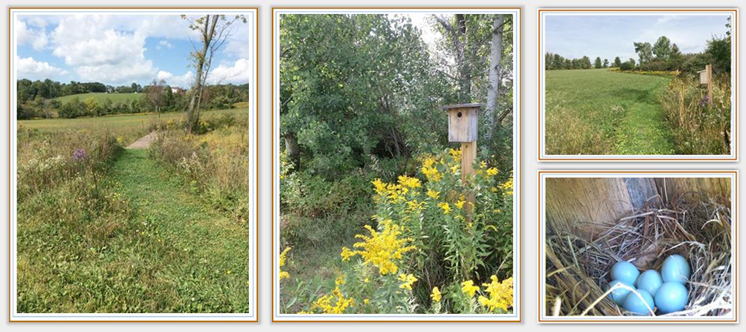 Bluebird Trail Farm trail pictures