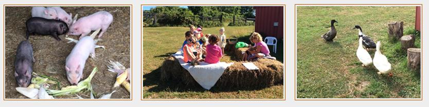Farm Tours at Bluebird Trail Farm