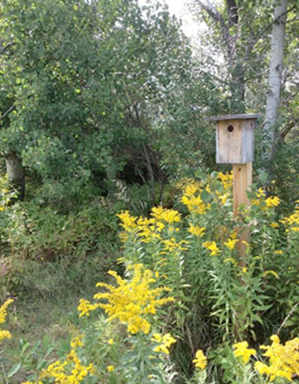 Bluebird House with Flowers