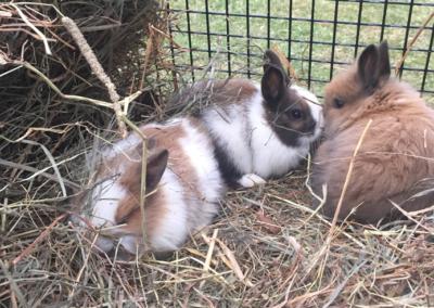 bunnies-gallery