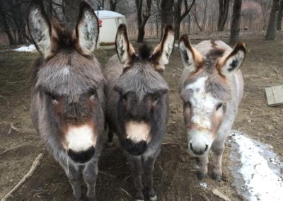 donkey-gallery1