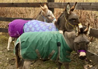 donkey-gallery2