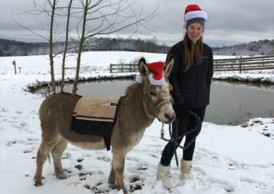 santa-donkey